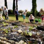 Kilrush Community Gardens